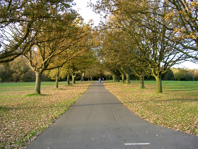 things to do in southampton the common
